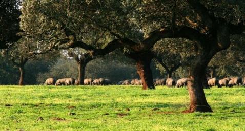País de Quercus